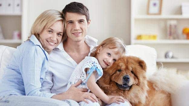 Wills & Trusts dog-young-family Direct Wills Queensbury